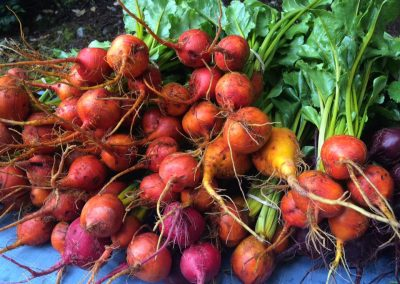 beets_coloured