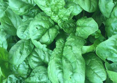 r5 spinach