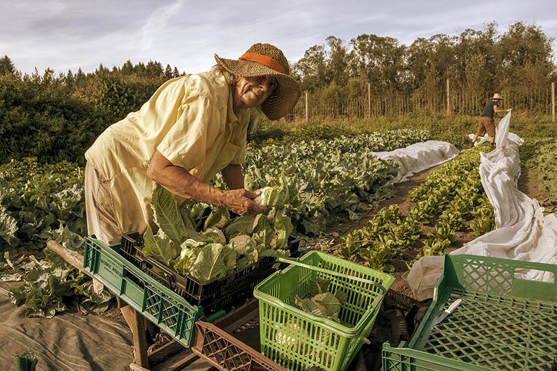 Good Earth Farm